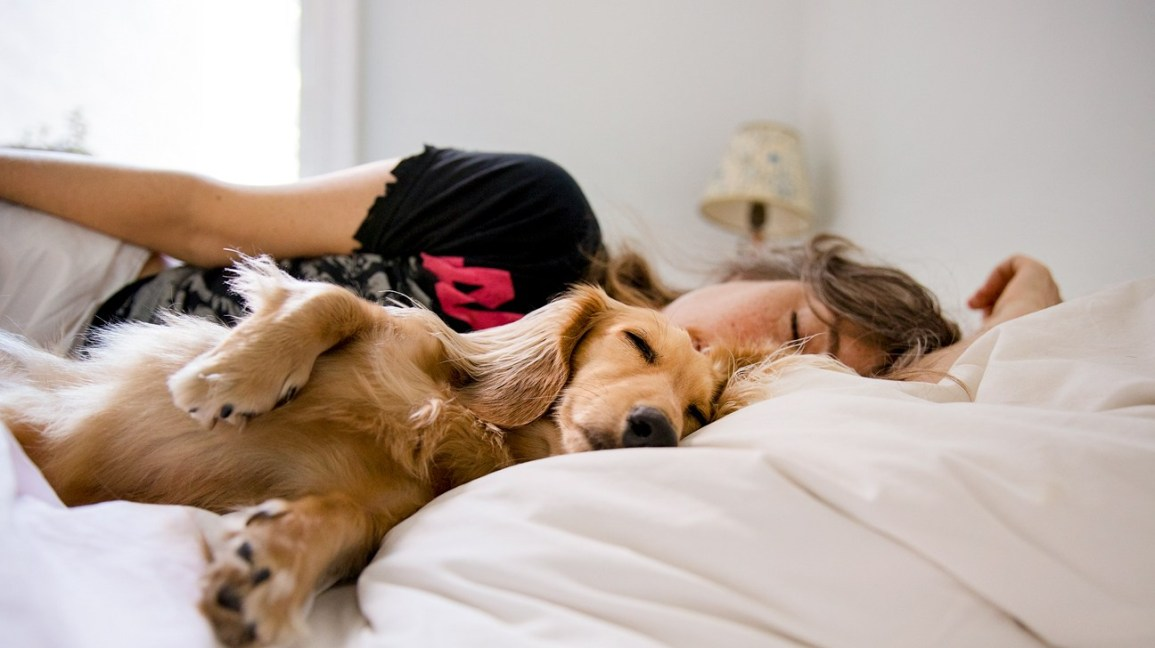 How to Keep My Pet's Health in Best Condition?